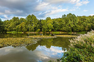 Фотографии Англия Озеро Леса Hartley Mauditt Lake Природа