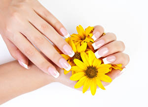Обои Пальцы Хризантемы Белый фон Маникюр