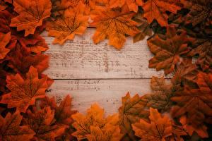 Фотография Листья Клён Шаблон поздравительной открытки