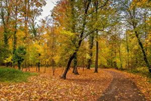 Фотографии Германия Осень Парки Деревья Листва Karlsruhe