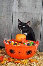 Обои Праздники Хеллоуин Кошка Тыква Пауки Конфеты
