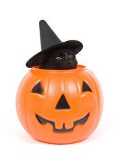 Фотография Праздники Хеллоуин Коты Тыква Белый фон Котята Шляпа