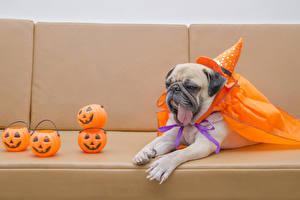 Обои Праздники Хеллоуин Собаки Тыква Мопс Шляпа Язык (анатомия) Животные