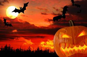 Обои Праздники Хеллоуин Тыква Свечи Небо Птицы Луна Природа