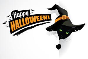 Фотографии Праздники Хеллоуин Векторная графика Коты Птицы Белый фон Английский Шляпа Животные