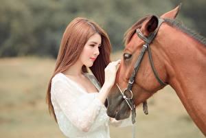 Фото Лошади Азиаты Шатенка Красивые Животные