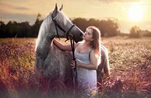Фотографии Лошади Шатенка Животные