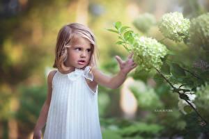 Фотографии Гортензия Девочки Русые Julia Altork Ребёнок
