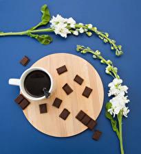 Фото Маттиола Кофе Шоколад Цветной фон Чашка Пища Цветы