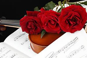 Фото Ноты Розы Трое 3 Красный Цветы