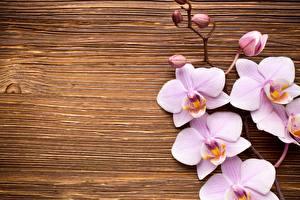 Картинка Орхидеи