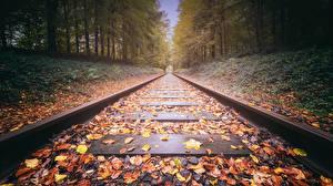 Обои Железные дороги Осень Листья Природа картинки