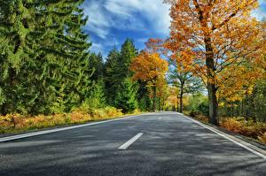 Обои Дороги Осень Асфальт Природа