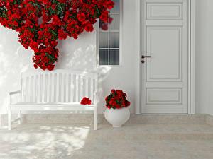 Фотографии Розы Скамейка Вазе Красные Дверь Дизайн Цветы