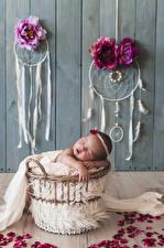 Фото Розы Ловец снов Доски Стенка Младенцы Спит Лепестки Ребёнок
