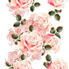 Фото Розы Розовая Белый фон Цветы