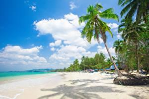 Фотографии Тропический Пляж Пальмы Деревья Природа