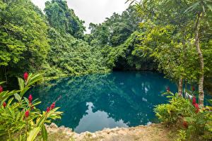 Картинка Тропики Парки Озеро Деревья Vanuatu