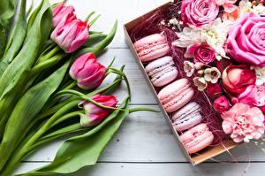Фотографии Тюльпаны Макарон Цветы