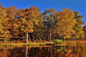 Фото Штаты Осенние Озеро Леса Деревья Maryland Redington Lake Природа