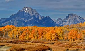 Фотография Штаты Осенние Парки Горы Деревья Grand Teton National Park Природа
