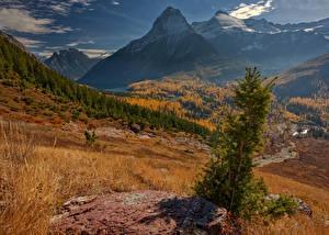 Картинки Штаты Осенние Парки Горы Пейзаж Леса Трава Glacier National Park Природа