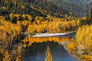 Фотография Штаты Осенние Реки Леса Middle Fork River Природа
