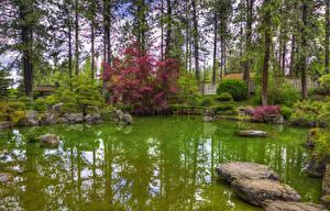 Картинка США Сады Пруд Вашингтон Кусты Деревьев Spokane Japanese Garden Природа