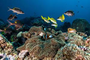 Фотографии Подводный мир Кораллы Рыбы животное
