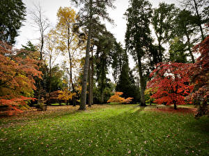 Фото Великобритания Парки Осень Деревья Трава Westonbirt Arboretum