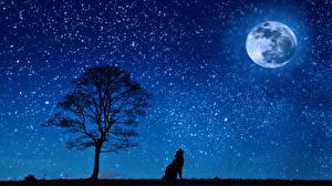 Картинки Волки Ночь Луны Деревья Силуэт