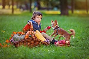Фотография Осенние Яблоки Собаки Корзина Трава Мальчики Сидящие Ребёнок