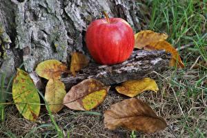Картинка Осень Яблоки Листья