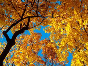 Фото Осенние Ветки Лист Природа