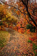 Фотография Осенние Ветвь Листья