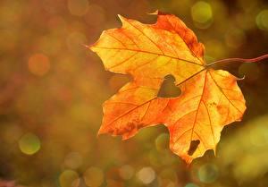 Фотография Осенние Вблизи Листва Клён Сердечко Природа
