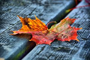 Картинка Осень Вблизи Доски Листья Клён