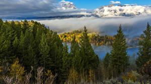 Картинка Осенние Леса Горы Пейзаж Ели Туман Природа