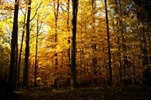 Обои Осень Леса Деревья Природа картинки
