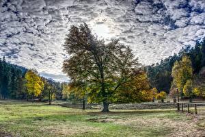 Картинка Осенние Леса Деревья Облака HDRI Природа