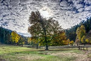 Картинка Осенние Леса Дерево Облачно HDR Природа