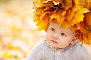 Картинки Осень Младенца Смотрят Листва ребёнок