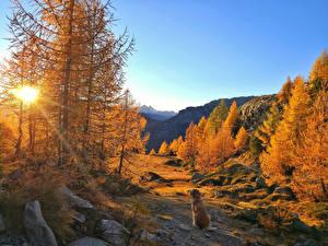 Фотографии Осенние Горы Собаки Камень Пейзаж Деревьев Лучи света Природа