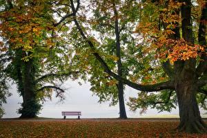 Фотография Осенние Парк Скамья Дерева Природа
