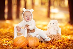 Картинки Осень Тыква Младенца Счастье Листья Сидит Дети
