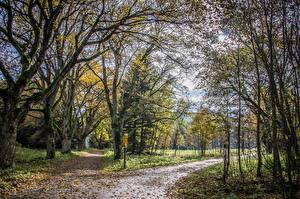 Обои Осенние Дороги Листья Деревья Природа