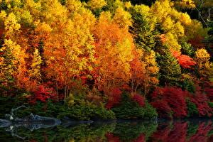 Картинка Осень Деревья