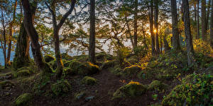 Обои Канада Осенние Парки Рассветы и закаты Камень Речка Ванкувер Деревья Мох East Sooke Park Природа