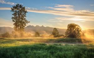 Обои Канада Рассветы и закаты Утро Деревья Трава Туман British Columbia Природа картинки