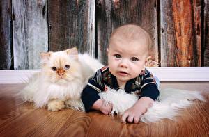 Фото Кошка Младенцы Взгляд Дети Животные